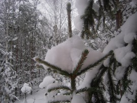 Naturkultur snö