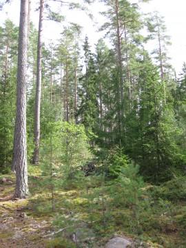 Kontinuitetsskogsbruk i ormeshaga