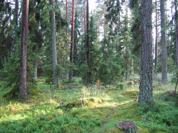 Naturkultur uppland