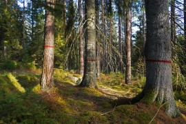 Naturkultur märkt skog